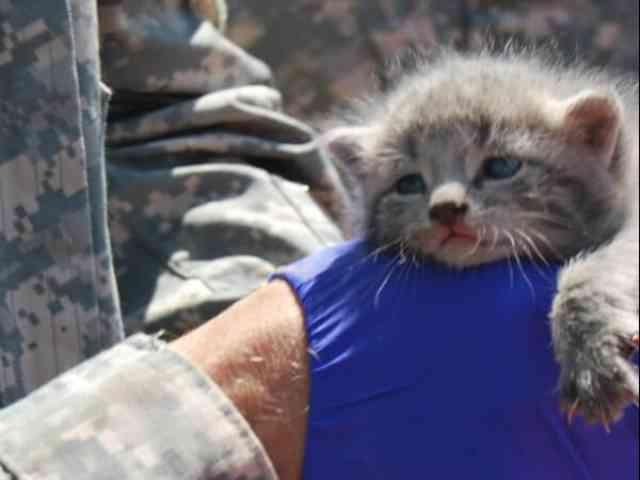 米軍基地のAH-1コブラから子猫