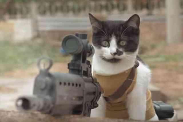 猫がゾンビと戦う!「Cats vs Zombies」